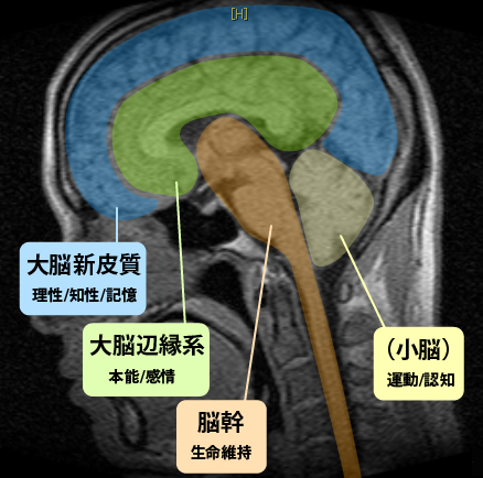 20160129_brain_hikaku_05